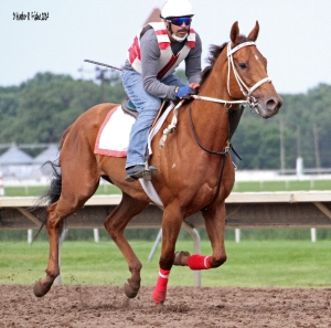 TERICE galloping by under Juan Delgado.