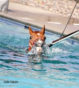 A visit to the pool where we watched a few horses work and learned about the therapeutic benefits of aquatic exercise.