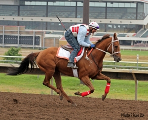 Again the Club folks were fortunate enough to see Terice gallop out on the racetrack at the end of morning works.