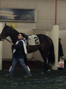 Maryjean in the paddock at Hawthorne before her race.
