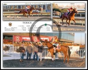 TERICE295HF14
