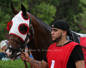 Citron Kid in the paddock prior to the race.